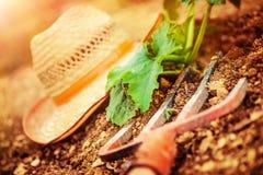 Farmer tools in the garden Stock Photography
