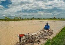 Farmer on a tractor. In rice field Royalty Free Stock Photo
