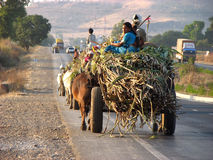 Farmer Transportation Royalty Free Stock Image