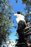 Farmer on tree Royalty Free Stock Images