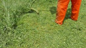 Farmer trimming cut grass in garden stock video