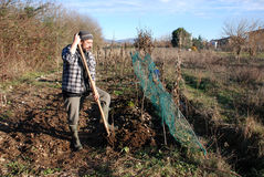 Farmer Turning Soil in Winter. A farmer uses a fork to mix leaf mulch into the upper layer of soil and turns it over with a pitch fork Royalty Free Stock Image