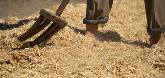 Farmer turns the hay with. A hay old fork stock images