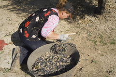 Farmer unload olives in a heap on the floor, Jaen Stock Photo