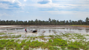 Farmer use local tracker to grow the rice with blue sky background Royalty Free Stock Photography