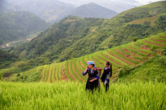 Farmer use phone. Woman farmer carry basket on shoulder work on rice terrace with her daughter use phone Stock Photos