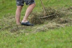 Farmer raking hay by rakes on meadow traditional. Farmer use traditional rakes to rake hay on meadow royalty free stock photos