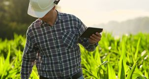 Farmer using digital tablet computer, cultivated corn plantation in background. Modern technology application in