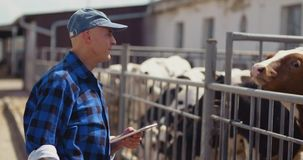 Farmer using digital tablet while looking at cows
