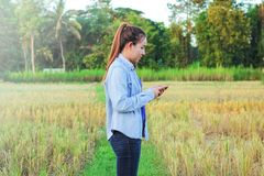 Farmer using digital telephone in cultivated rice field Stock Photography