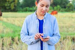 Farmer using digital telephone in cultivated rice field Stock Image