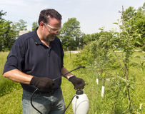 Farmer Using A Organic Spray On Some Apple Trees Royalty Free Stock Photography