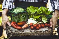 Farmer with vegetables Stock Photos