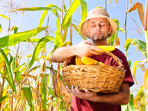 Farmer verifying maize Stock Images