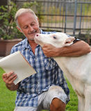 Farmer veterinarian controlling a cow Royalty Free Stock Image
