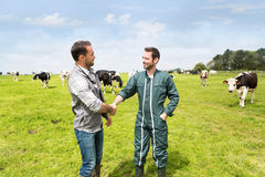 Farmer and veterinary working together in a masture with cows Stock Photography