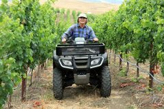 Farmer in vineyard. Driving small tractor or all terrain vehicle Stock Photo