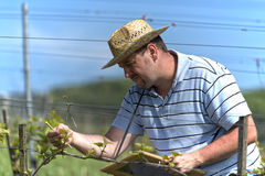 Farmer in the vineyard Stock Photography