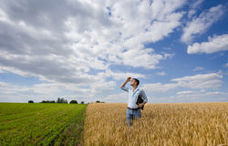 Farmer waiting for rain. Young farmer standing in ripe wheat field and looking in the sky for rain royalty free stock photos