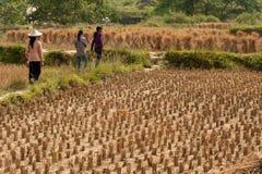 Farmer walking in a field. Stock Image