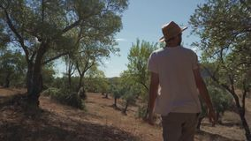 Farmer walking through his farm. Travelin shot of a farmer walking through his farm of ecological olive trees stock footage