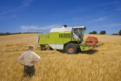 Farmer watching combine in barley field Stock Image