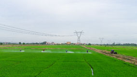 Farmer water-pouring cerenomy to young terrace rice plantation Stock Photo