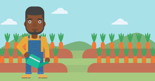 Farmer with watering can. An african-american man holding a watering can on the background of carrots growing on field vector flat design illustration Royalty Free Stock Photography