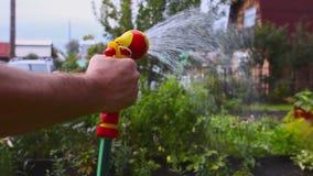 Farmer is watering plants stock video