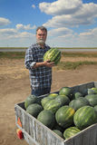Farmer and watermelon Stock Photography
