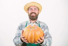 Farmer wear apron hold pumpkin white background. Agriculture concept. Farmer guy carry big pumpkin. Locally grown foods stock images