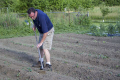 Farmer Weeding His Garden With A Hoe Royalty Free Stock Images