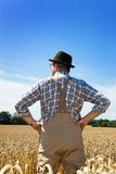 Farmer in a wheat field. A farmer checks his fields in agriculture. Mature wheat field in summer Stock Images