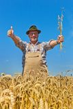 Farmer in a wheat field. A farmer checks his fields in agriculture. Mature wheat field in summer Stock Image