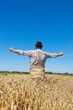 Farmer in a wheat field. A farmer checks his fields in agriculture. Mature wheat field in summer Royalty Free Stock Images