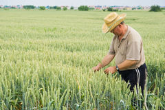 Farmer on wheat field Stock Photography