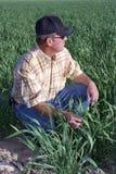 Farmer in wheat field. Profile of farmer kneeling in a wheat field stock image