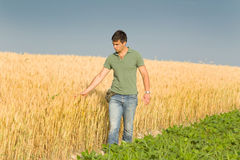 Farmer in wheat field. Conceived young farmer touching ripe golden wheat in field Royalty Free Stock Photos