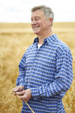 Farmer In Wheat Field Inspecting Crop Royalty Free Stock Images