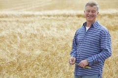 Farmer In Wheat Field Inspecting Crop Stock Photo