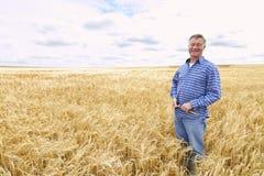 Farmer In Wheat Field Inspecting Crop Royalty Free Stock Photo
