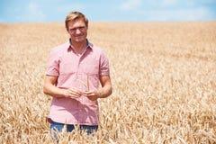 Farmer In Wheat Field Inspecting Crop Stock Image