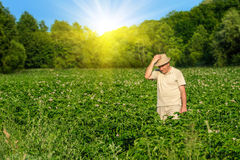 Farmer in the wheat field. Old farmer walks in field on the sunny day Royalty Free Stock Photography
