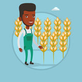 Farmer in wheat field vector illustration. African-american farmer working in wheat field. Farmer standing on the background of wheat field. Farmer checking Royalty Free Stock Photography