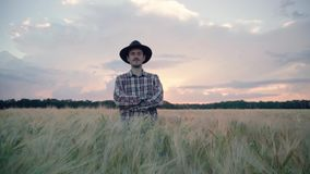 Farmer in the wheat field. Young male farmer walk on the beautiful summer wheat field during sunset stock footage