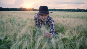 Farmer in the wheat field. Young male farmer walk on the beautiful summer wheat field during sunset stock video footage