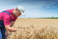 Farmer in wheat fields Stock Photography