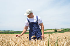 Farmer in wheat fields Stock Images