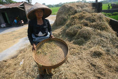 Farmer Royalty Free Stock Photos
