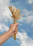 Farmer With Wheat Stock Photo
